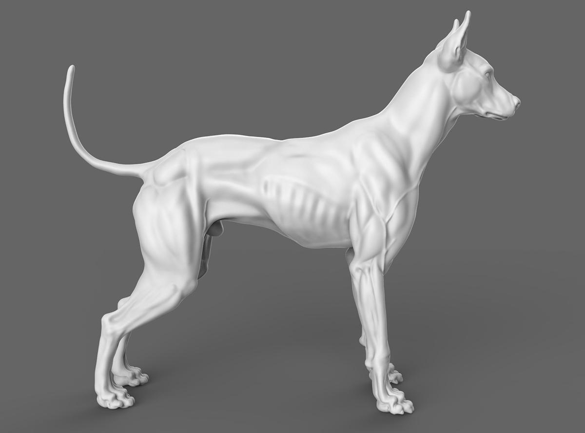 мышцы собаки фото