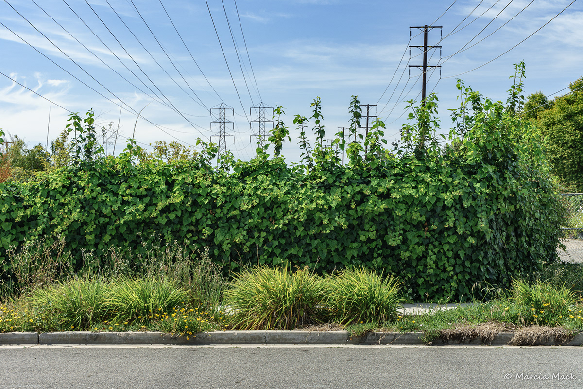 Adobe Portfolio Huntington Beach fountain valley costa mesa newport beach orange county California high tension lines power grid power lines photographs marcia mack electric grid edison