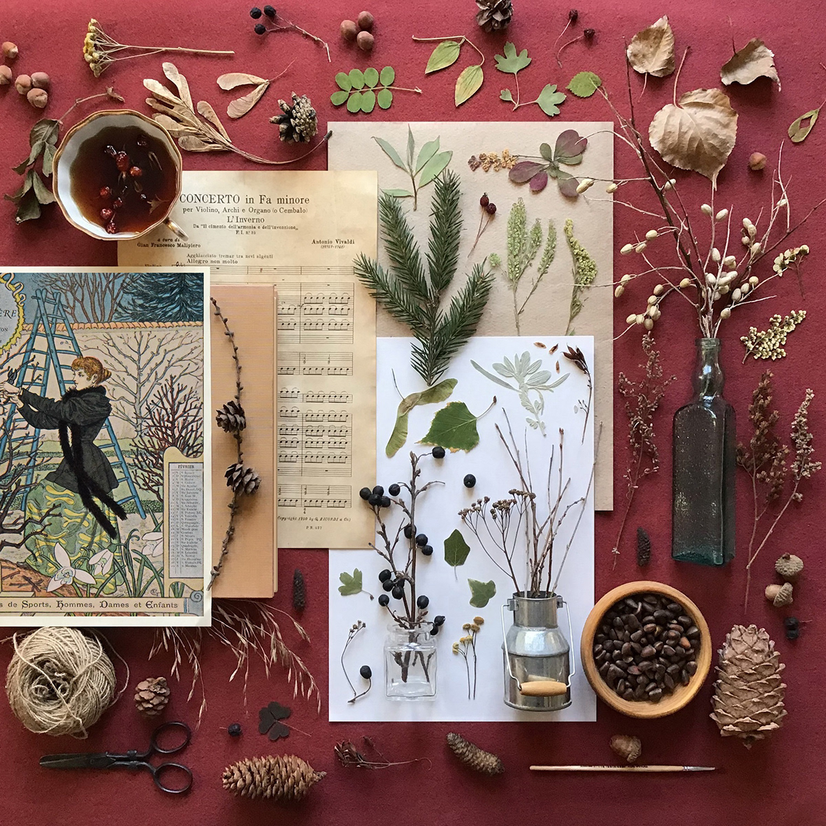 book illustration botanical botanical art calendar Herbarium pressed flowers pressed plants vintage illustration