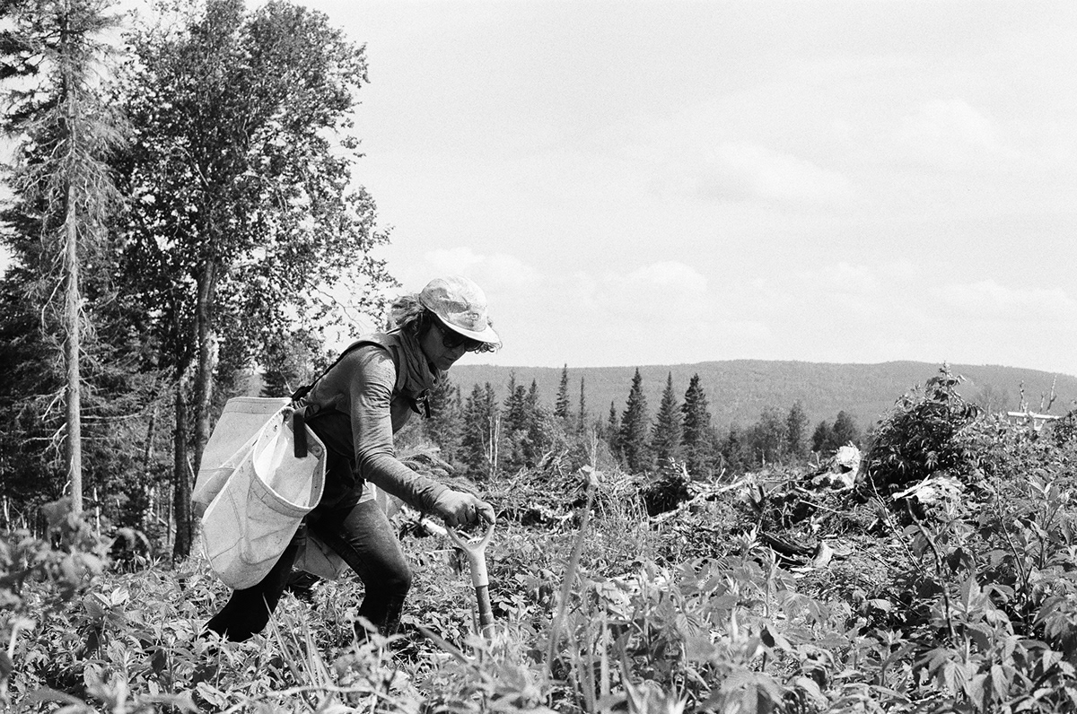 Canada film photography forestry gaspésie montreal photographer Tree Planting