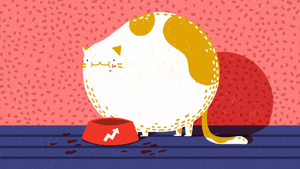 pattern Cat animation  2D texture Character marketing