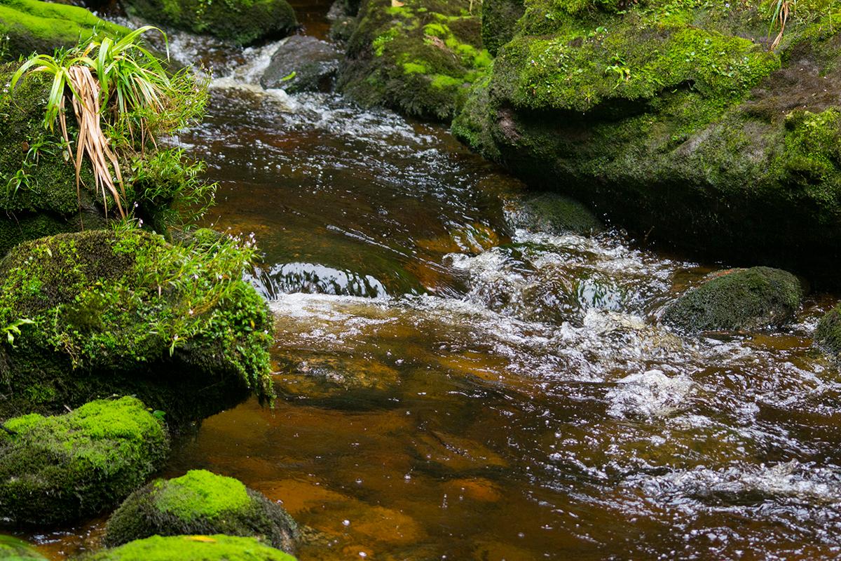 Naturaleza y Paisaje