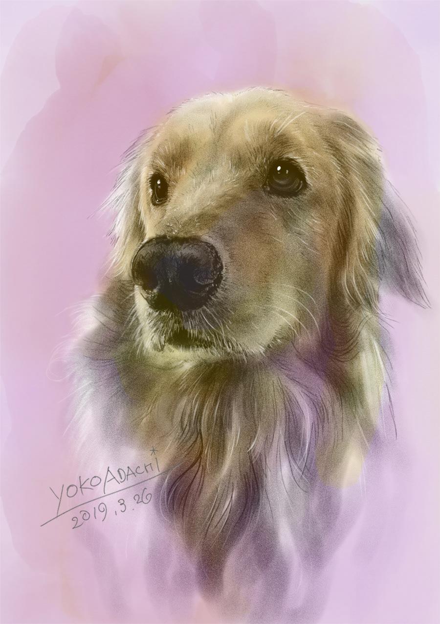 ILLUSTRATION  dogillustration GOLDENRETRIEVER Retriever dog art Drawing  sketch animalart animaldrawing
