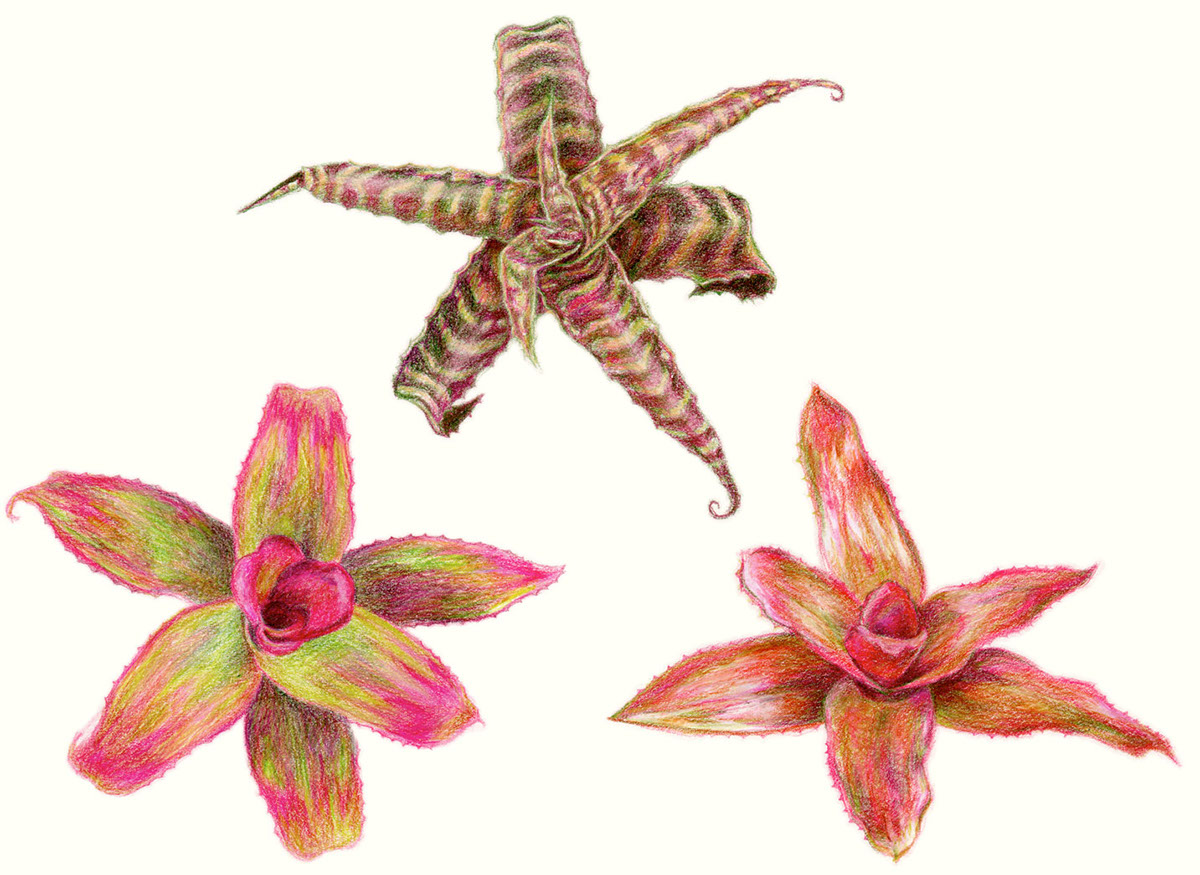 Scientific Illustration Plants