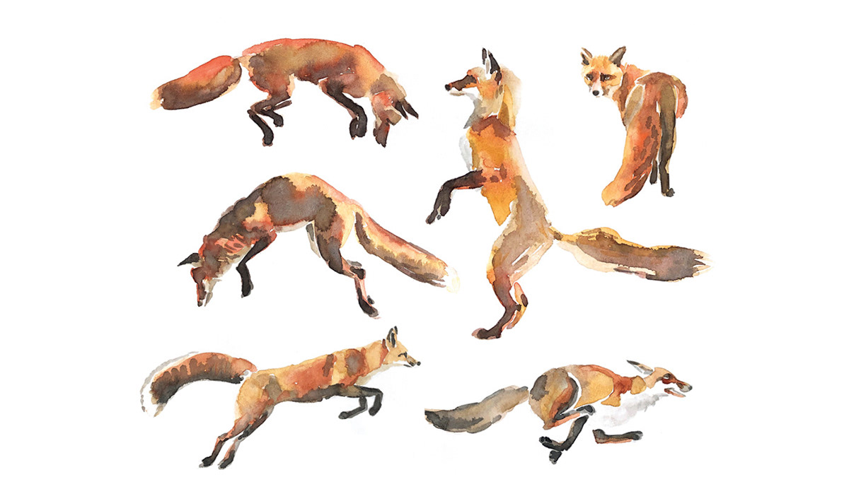 animal illustration fox illustration fox watercolors foxes in motion painted foxes watercolor animals watercolor illustration Watercolor studies Wildlife Illustration
