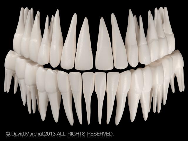 Human    teeth on Behance