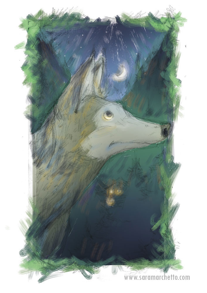 wolf color sketch