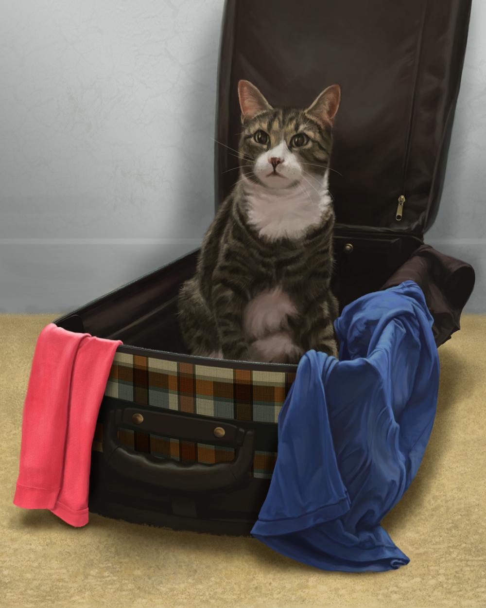 leela Cat in suitcase