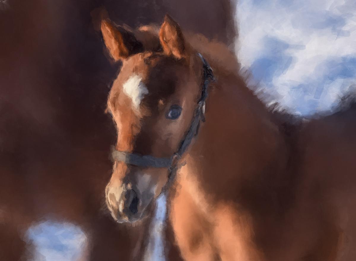 Adobe Portfolio horses foal Filly  mileham show horses