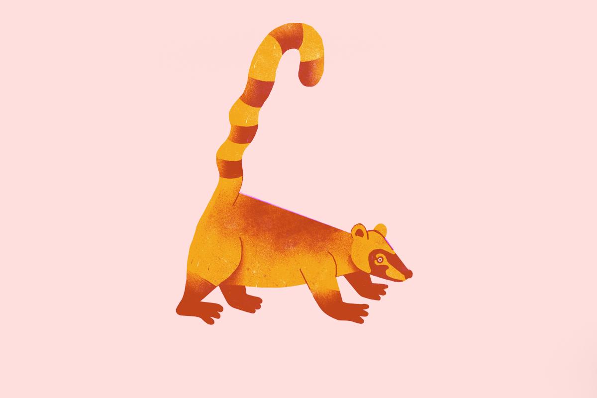 selva animales animal cuentos infantil ilustracion ILLUSTRATION