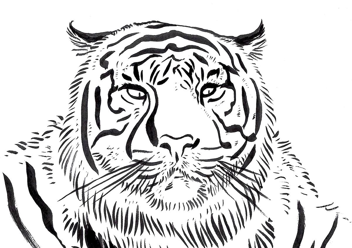 book children children's illustration ILLUSTRATION  illustrations ilustracion ilustracioninfantil ink jungle junglebook