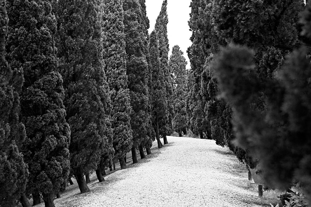 Biennale blackandwhite Landscape Venice