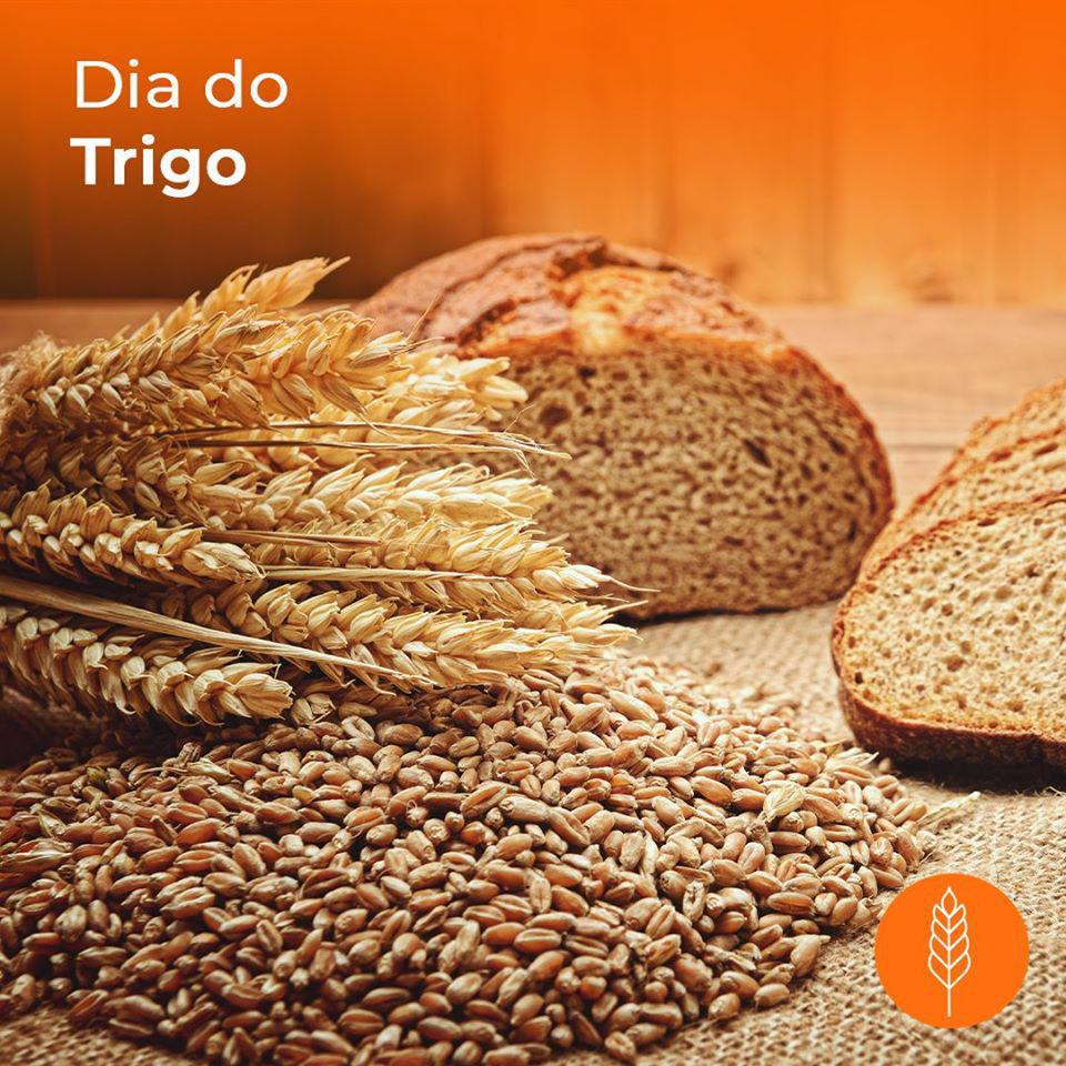 Dia do Trigo on Behance
