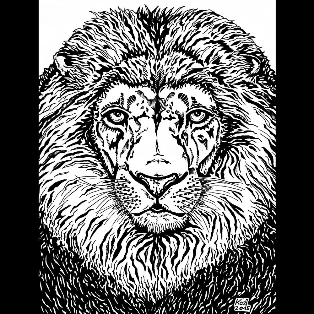 lion Lions animal predator africa ILLUSTRATION  pen drawing african Savannah eyes