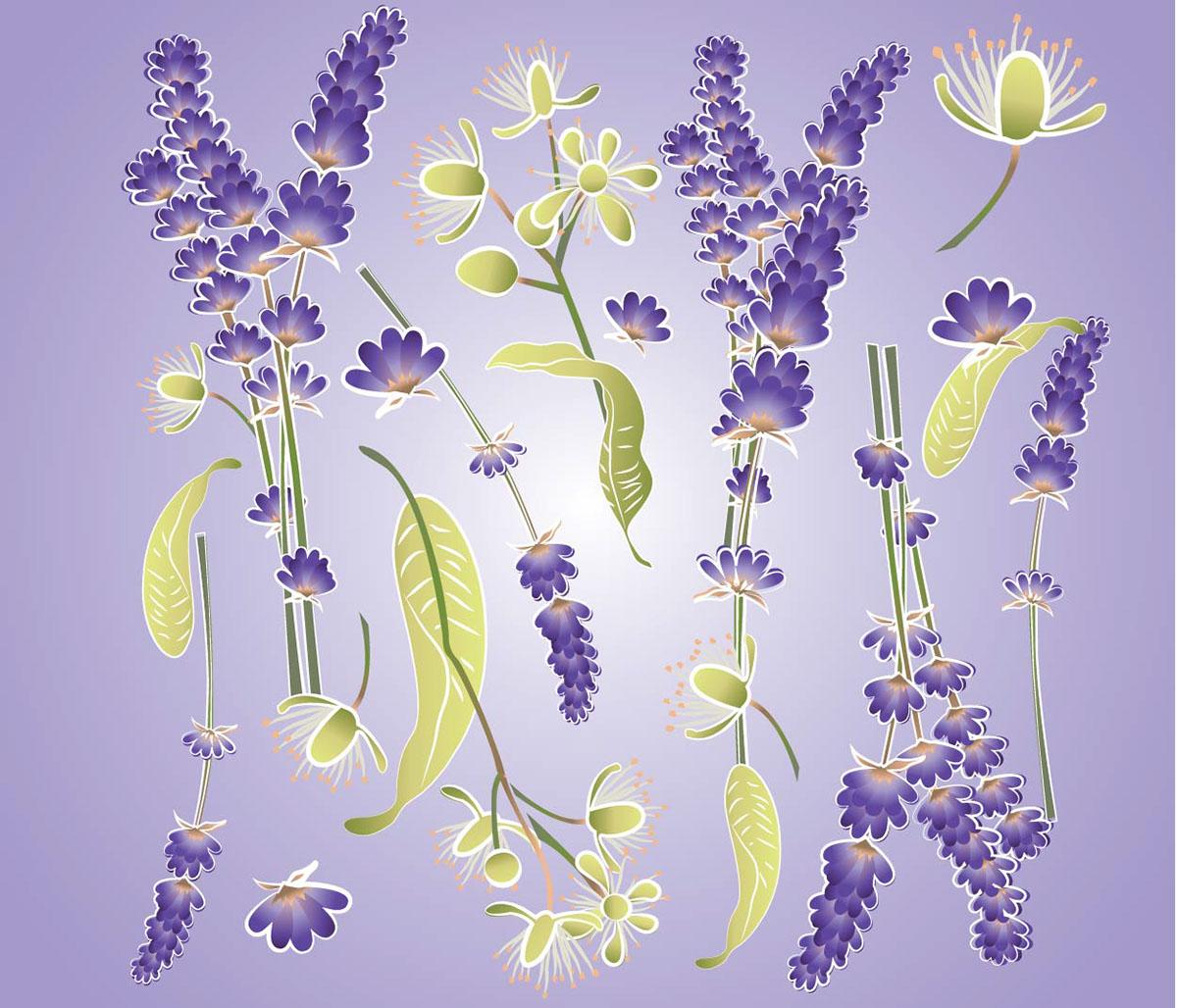 ilustracion etiqueta Flores tilo lavanda naturaleza