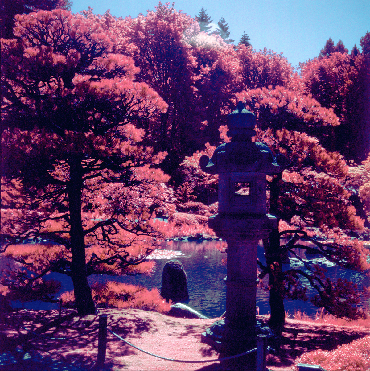 aerochrome infrared film in seattle on behance
