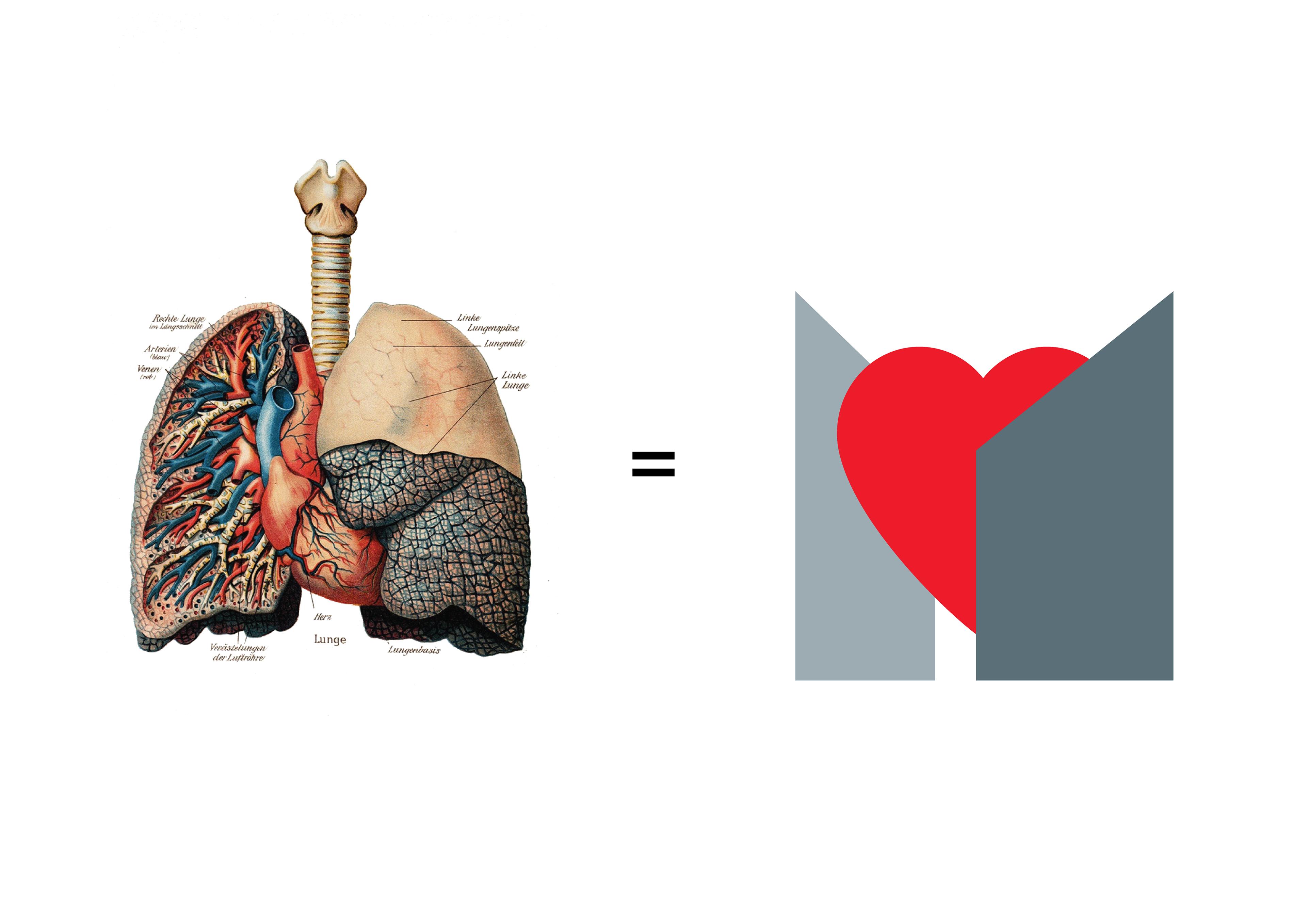 Ziemlich Rechte Lunge Anatomie Zeitgenössisch - Menschliche Anatomie ...
