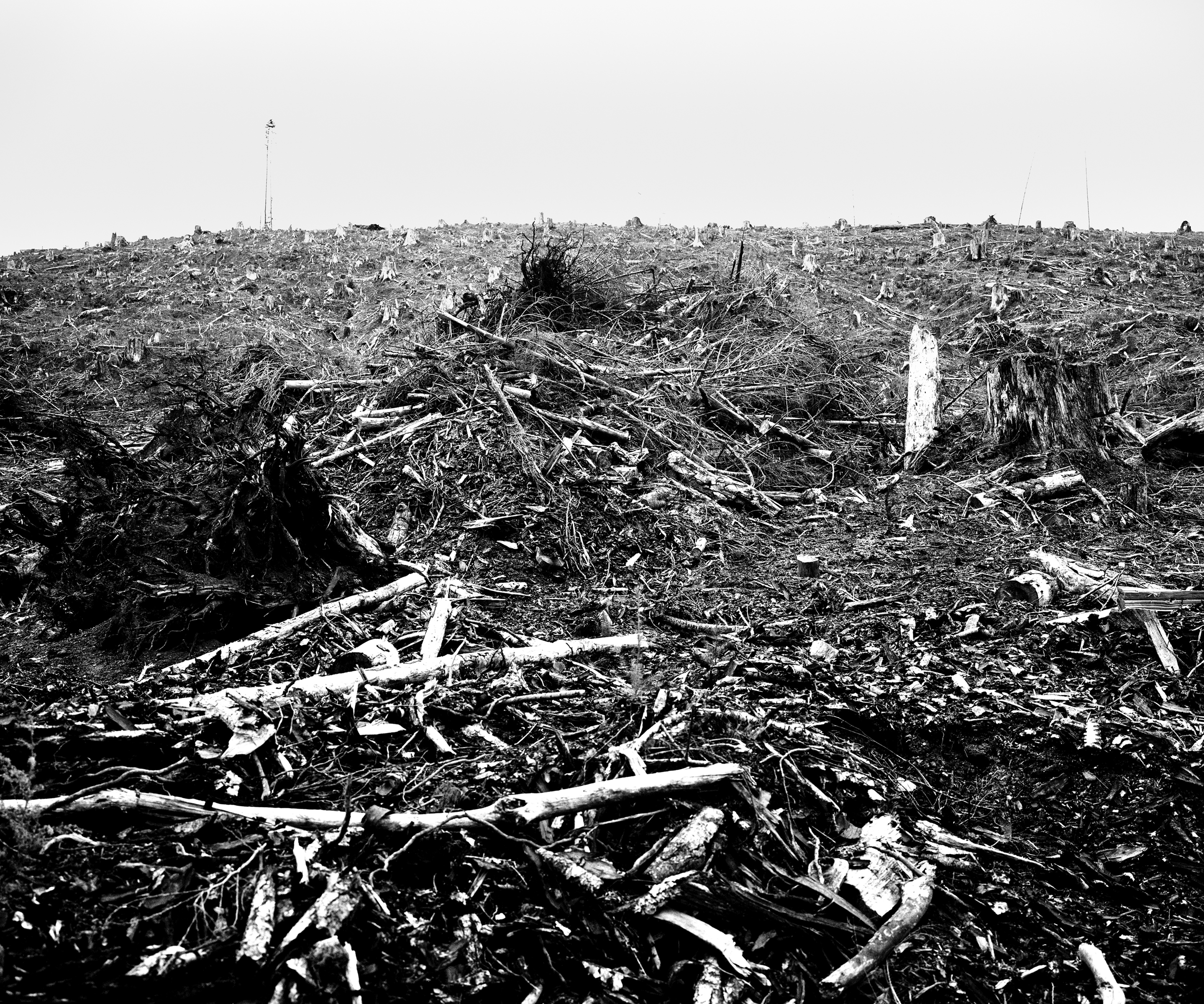 A field of mangled wood, branches and tree stumps