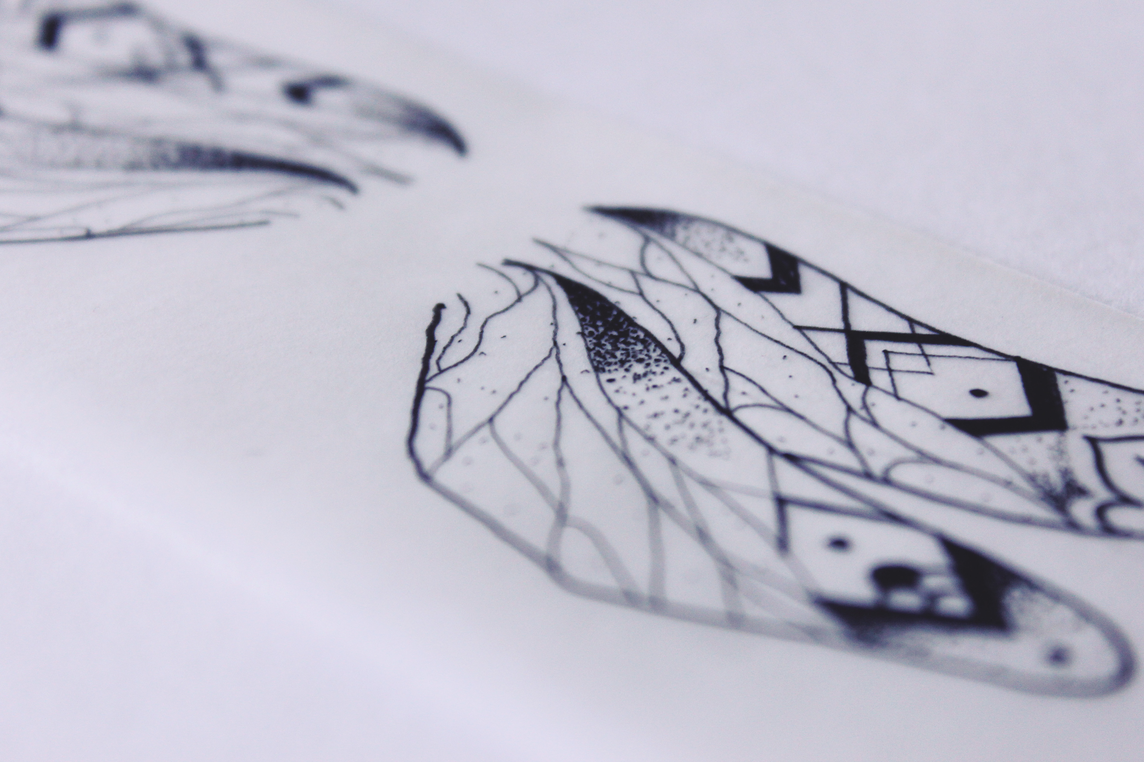 Line Drawing Net : My modernist dragonfly on behance