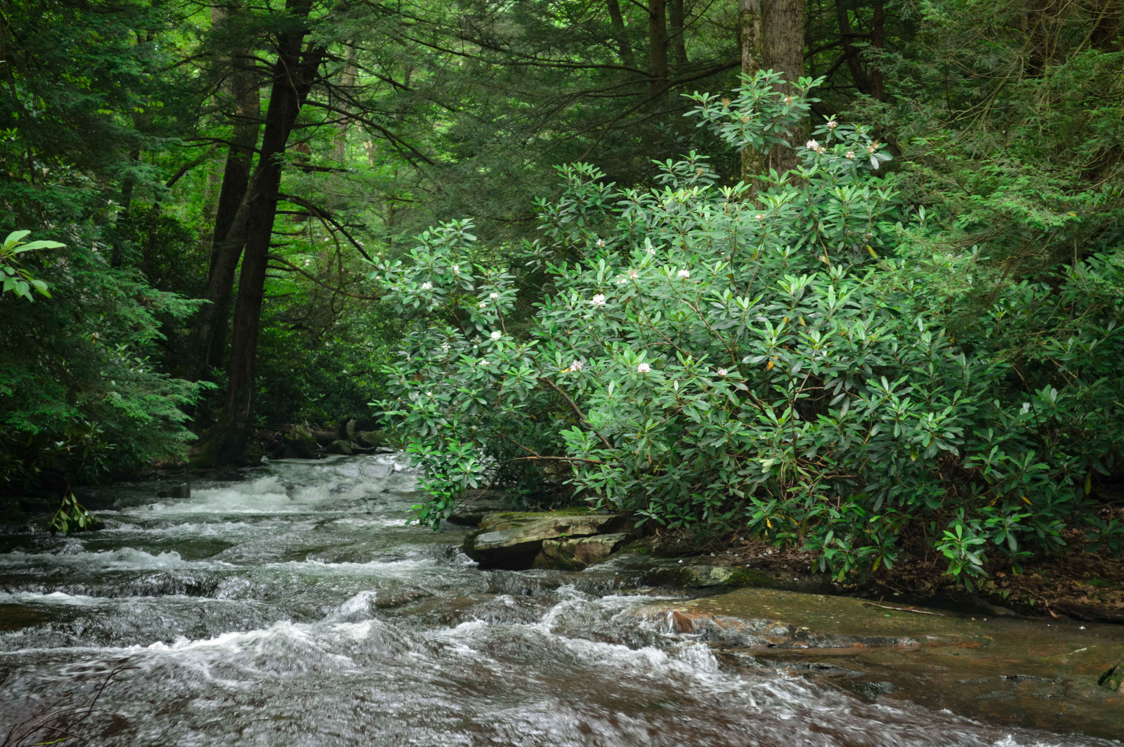 forest stream landscape