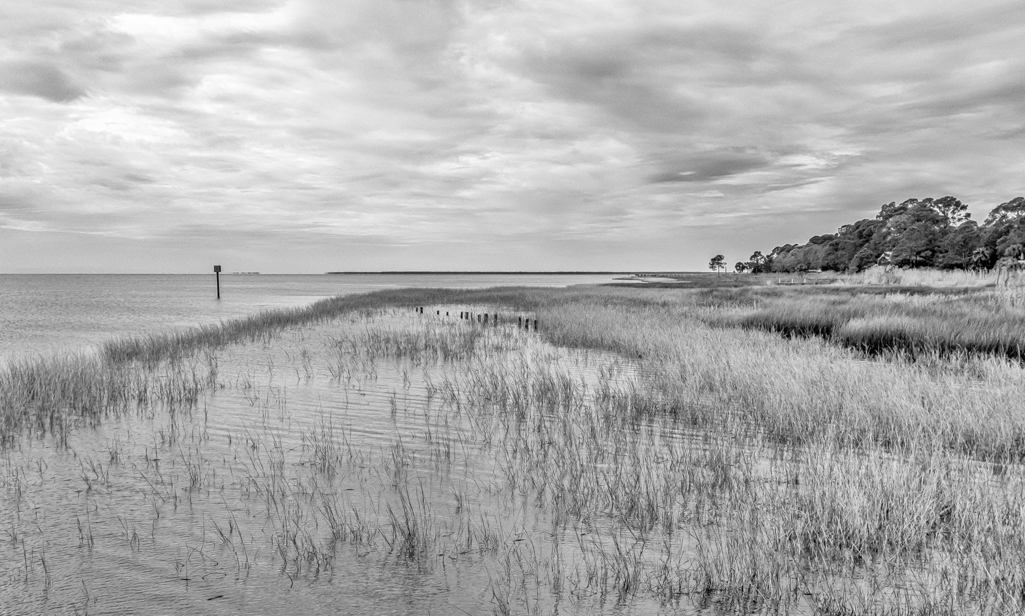 Reeds between land and open water in Apalachicola, FL