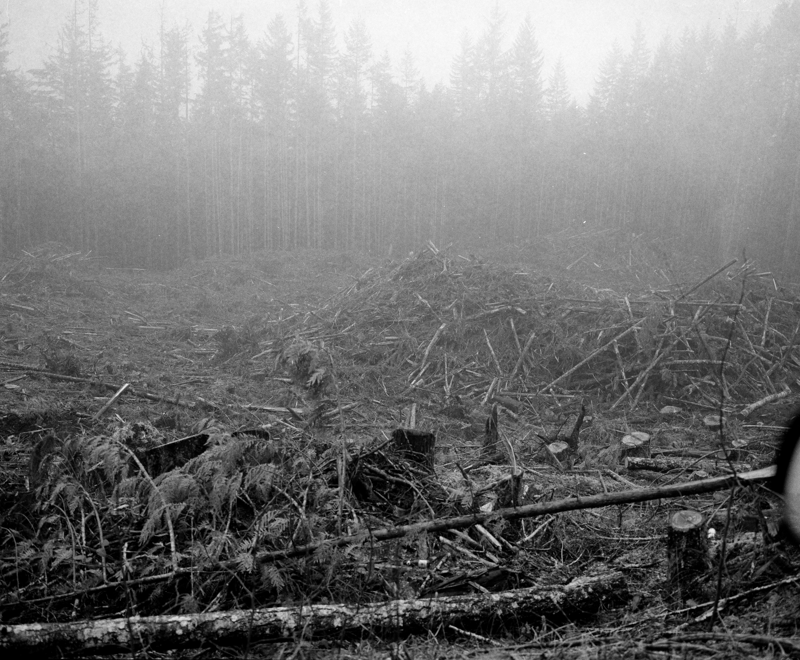 logs, wood chips infront of a forested area covered in mist