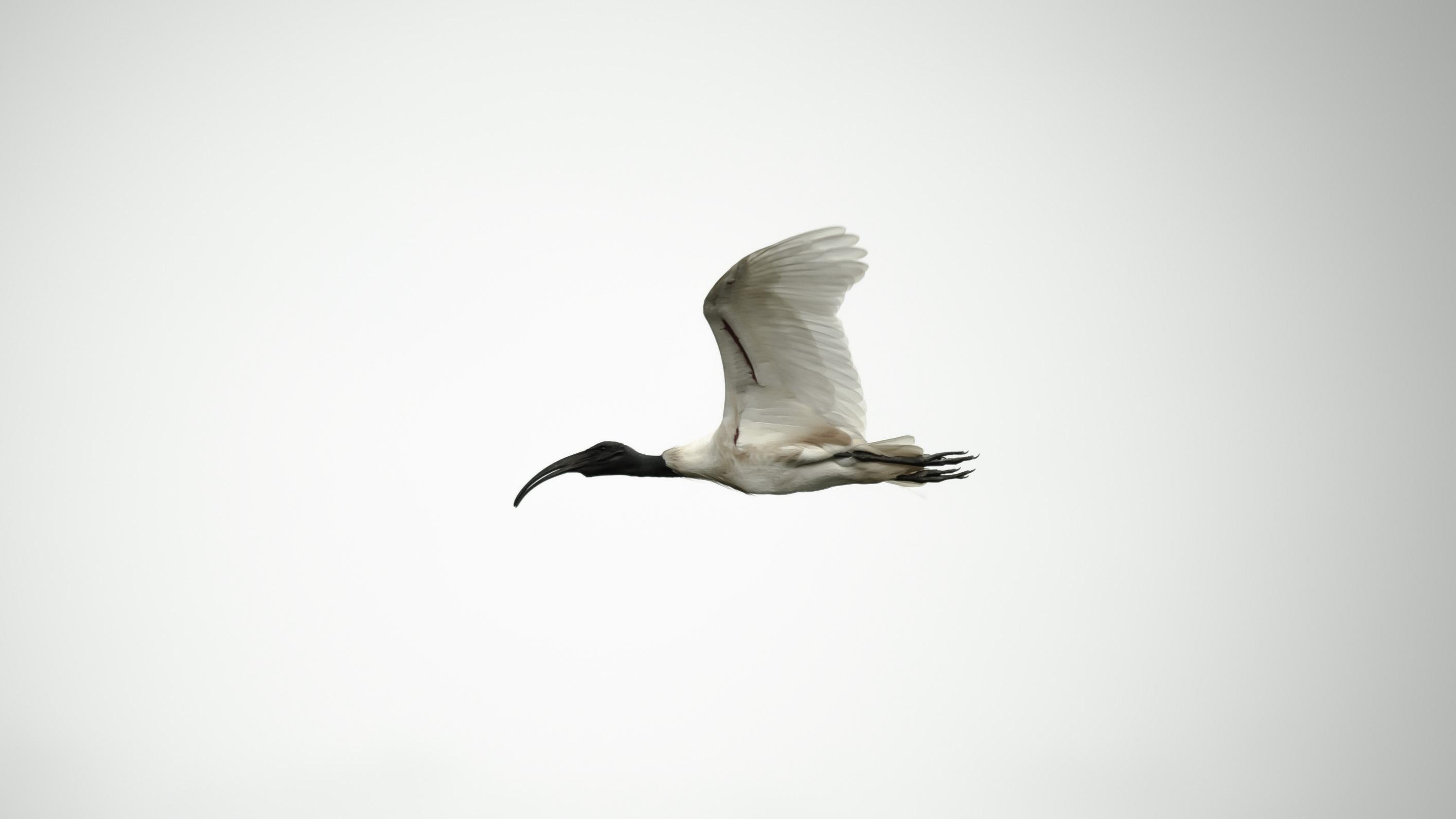 Karunakaran Tk Birds Of Wisdom