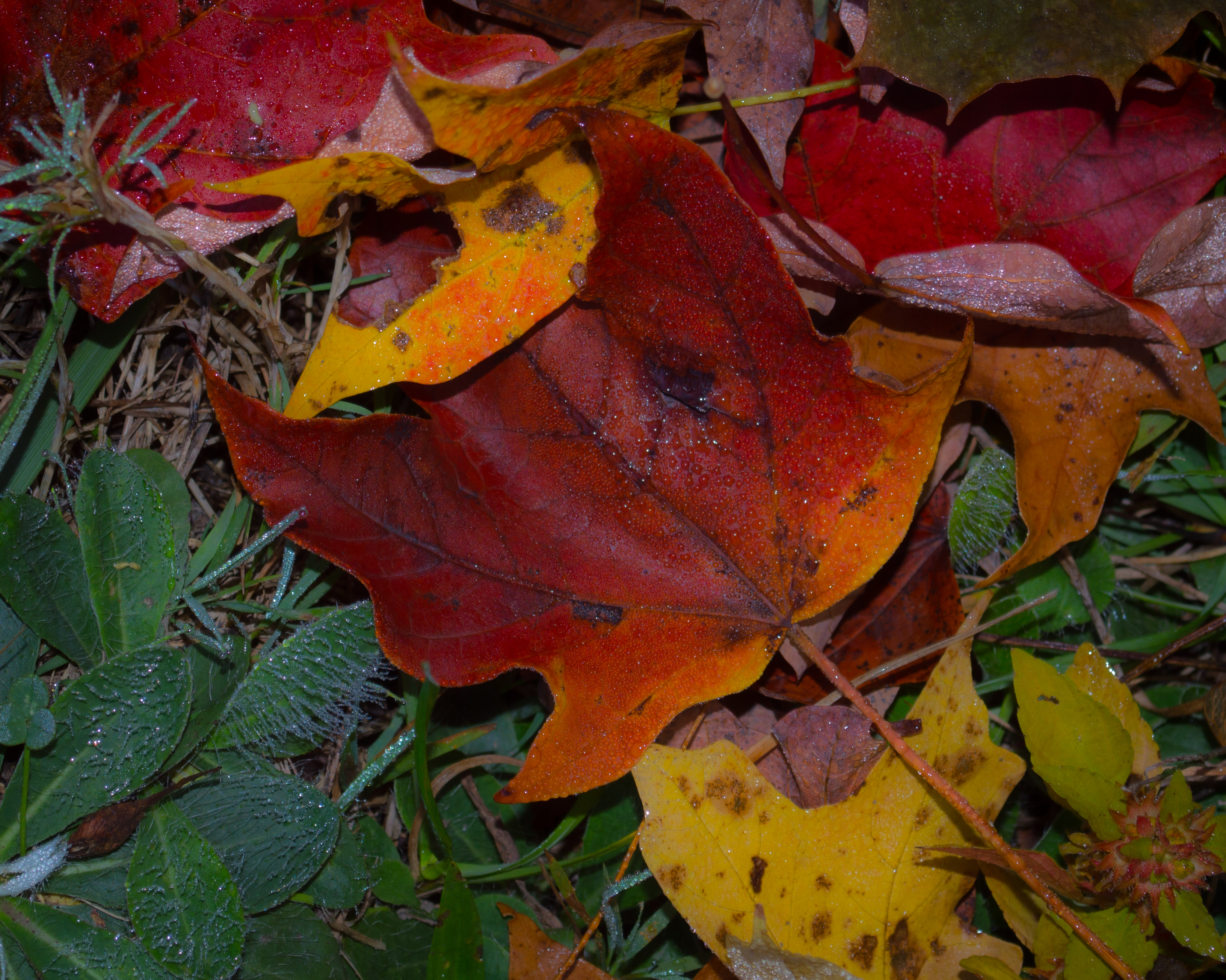 fall colorful leaves on grass