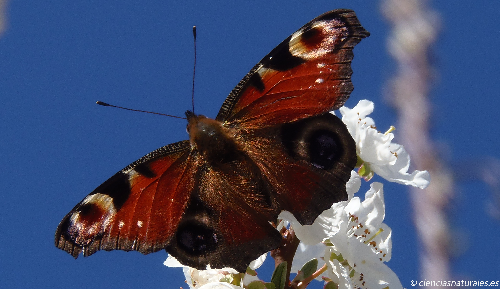 """Clasificación de Animales Invertebrados en """"cienciasnaturales.es"""""""
