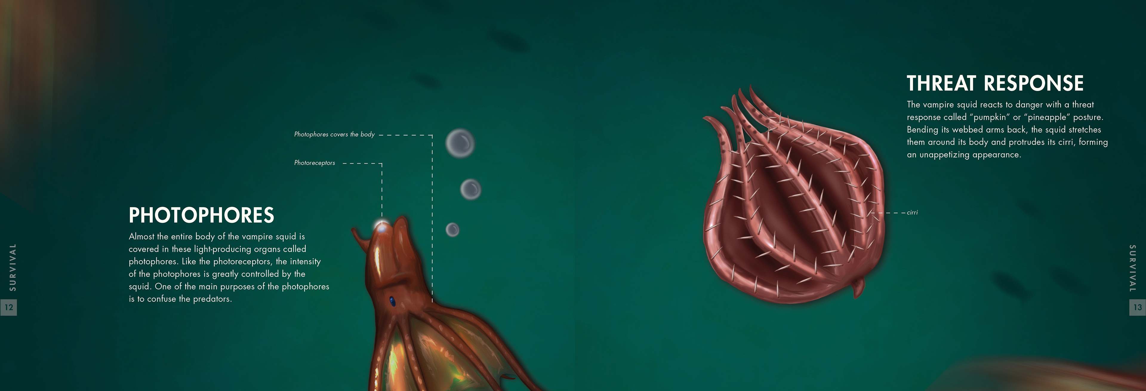 Unique Vampire Squid Anatomy Photo - Physiology Of Human Body Images ...