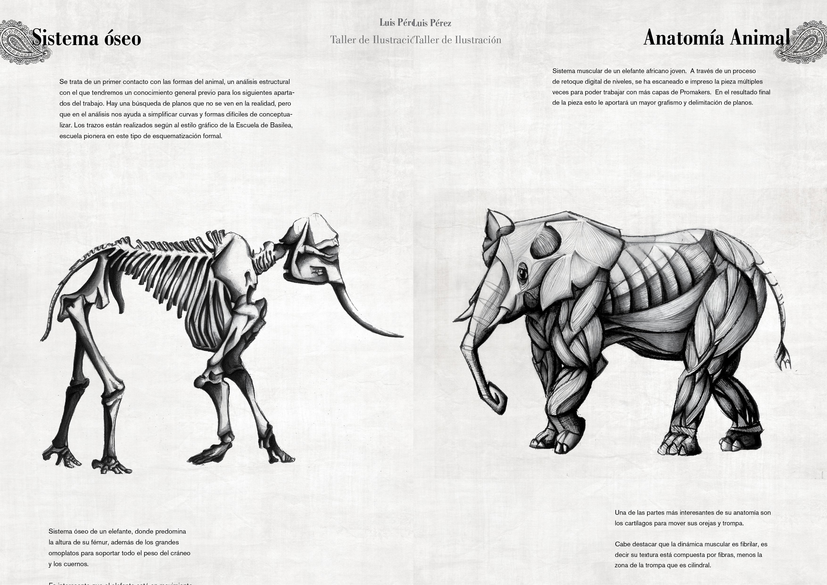 Único Elefante Anatomía Del Tronco Regalo - Anatomía de Las ...