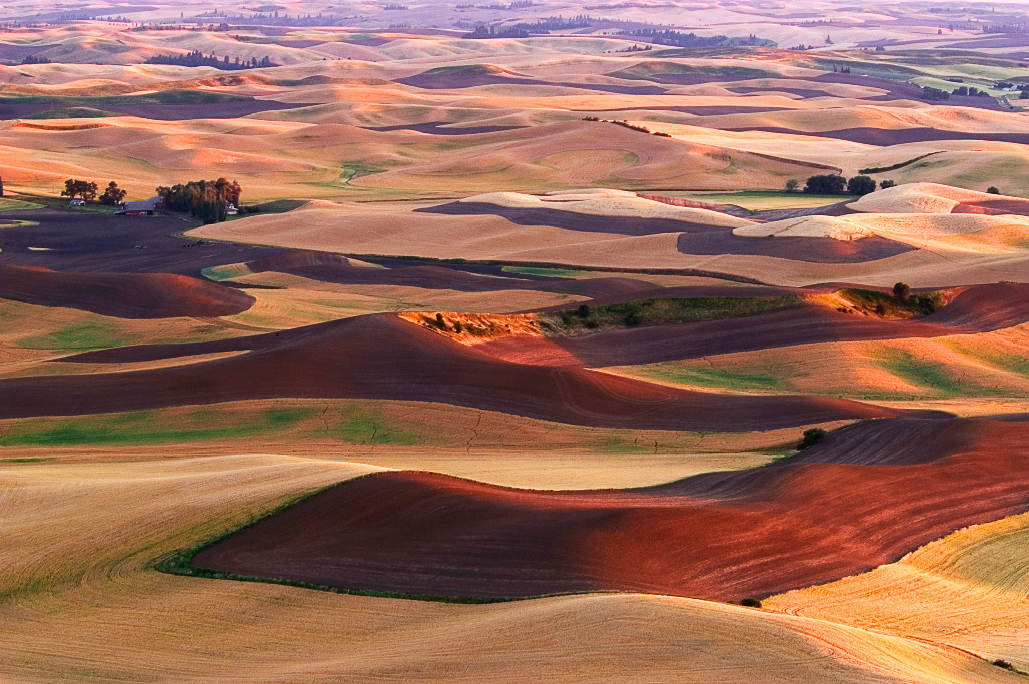 Chocolate and Caramel Mounds - Steptoe Butte, Washington Early July from the highest point in the Palouse region of eastern Washington. The wheat fields below are ripening as they await the harvest. The contours of the farmland in this area provide some amazing views from early spring until the late fall.