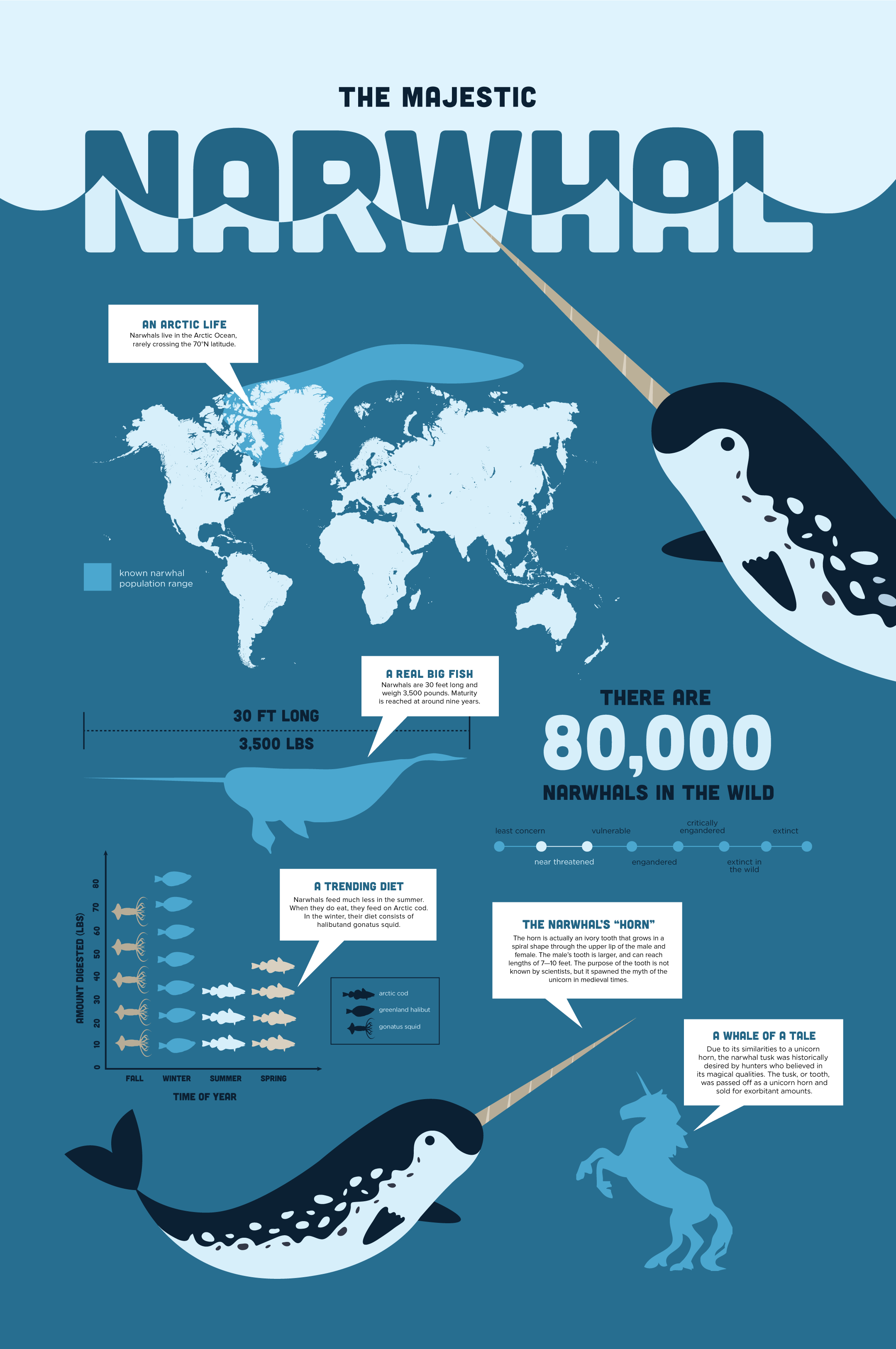 narwhal infographics on behance