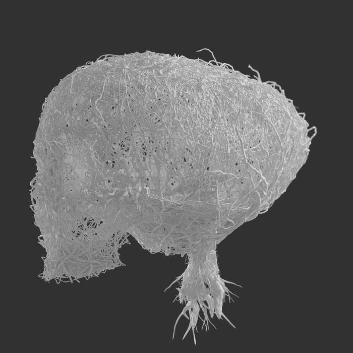Crâne Végétal - Mathieu Briand