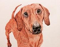 Biro Sausage Dog