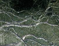 Lleu's Oak
