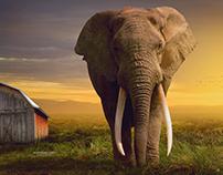 Elephant - Photoshop Manipulation