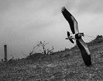 Bifurcando a Mente - por Ederson Rodrigues