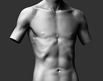 Male Torso - Study 01