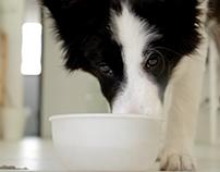 Kitsap Humane Society-Ad