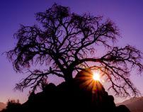 Joshua Tree Sunrise & Starbursts