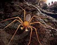 Trogloraptor - Cave Spider | Stuart Jackson-Carter