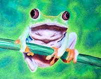 Art   Umbrellas and Frog