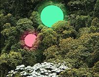 Bush moons