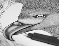 Toucans & Harpy Eagle