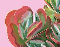 Succulent Pair