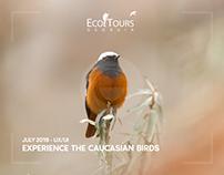 EcoTours - UI/UX