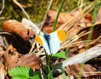 Fjärilar och insekter