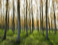 Woods / Intentional Camera Movement