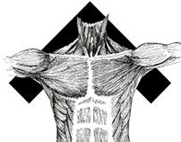Anatoma Runes